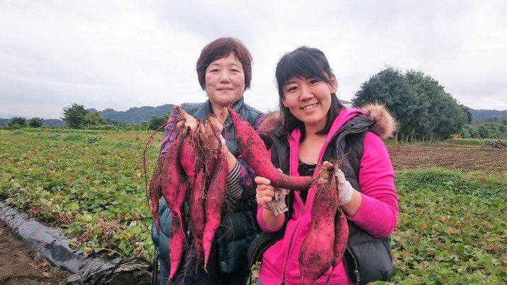 芋掘りイベント芋フェスタ! の様子をレポート!