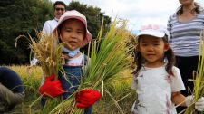 【体験レポート】お日様の恵みたっぷり!稲刈り体験