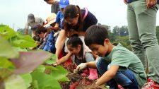 【体験レポート】さつまいも収穫体験〜ホックホクの秋の幸せ〜
