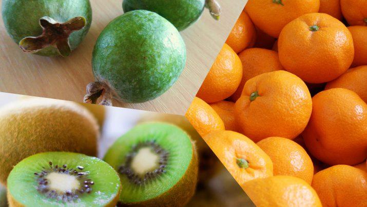 キウイフルーツ・みかん・フェイジョア~秋の絶品国産フルーツ収穫体験~