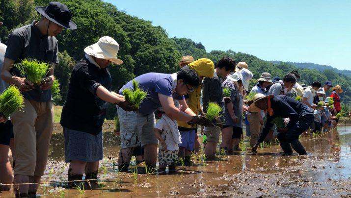 【体験レポート】 昔ながらの田植えに挑戦!田植え体験
