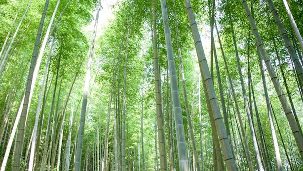 たけのこ狩り〜春の竹林で癒しのひととき〜