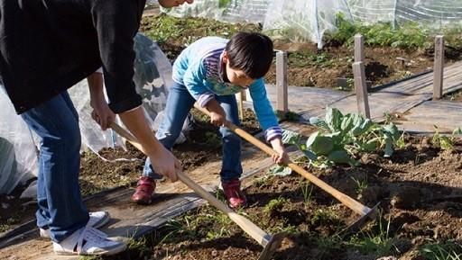 夏野菜の苗_植付講習会
