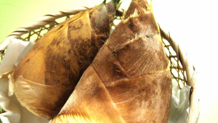 孟宗竹のたけのこ狩り! 太くて柔らか香り高い!