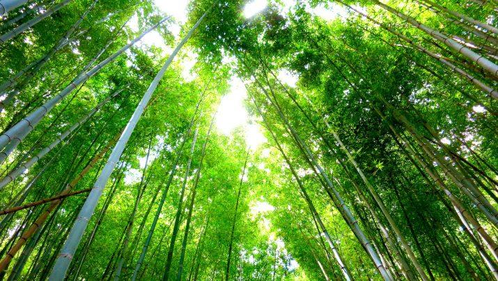 たけのこ狩り〜香り高い孟宗竹を掘ってすぐに茹で上げ〜